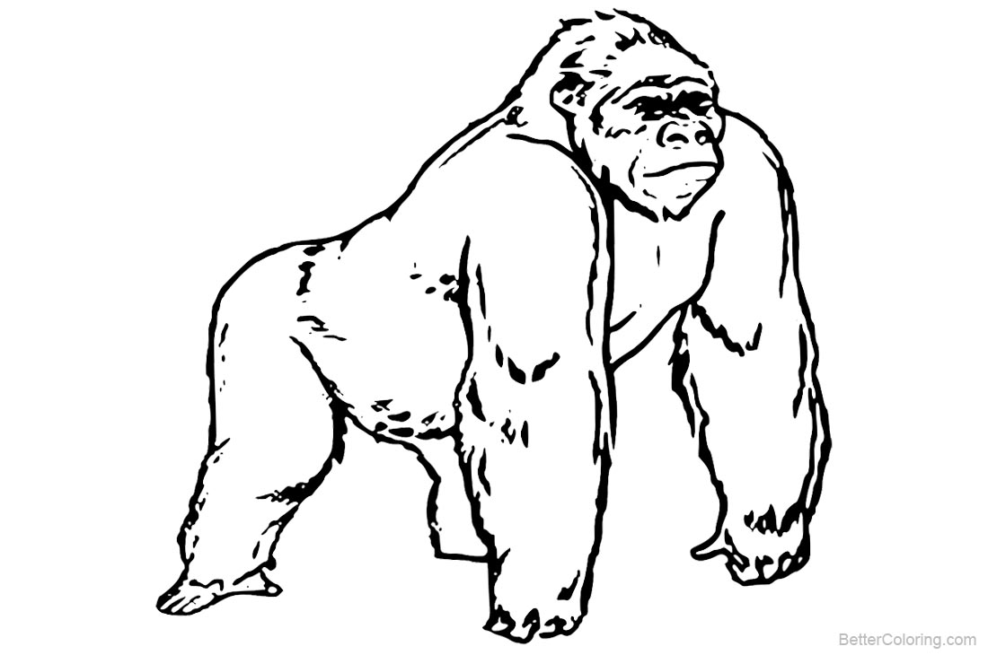gorilla pictures to print gorilla relaxing coloring page free gorilla coloring print to gorilla pictures
