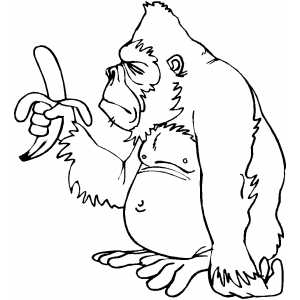 gorilla pictures to print gorilla with banana coloring page pictures print gorilla to