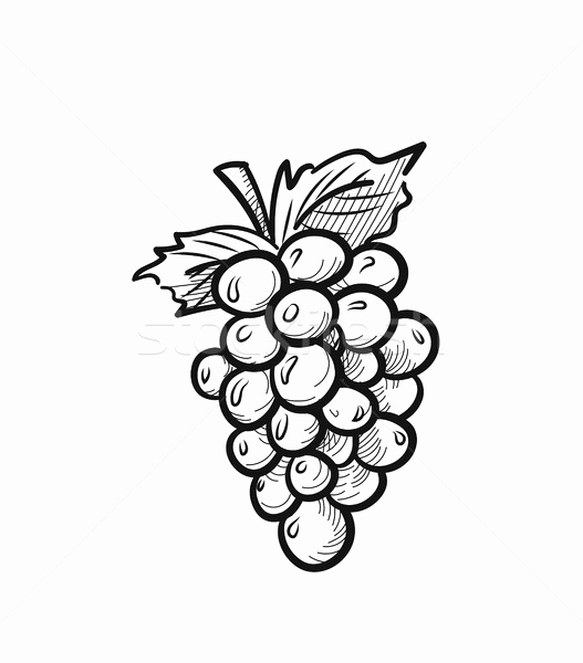 grapes drawing hand drawing background of fresh pione grapes drawing by grapes drawing