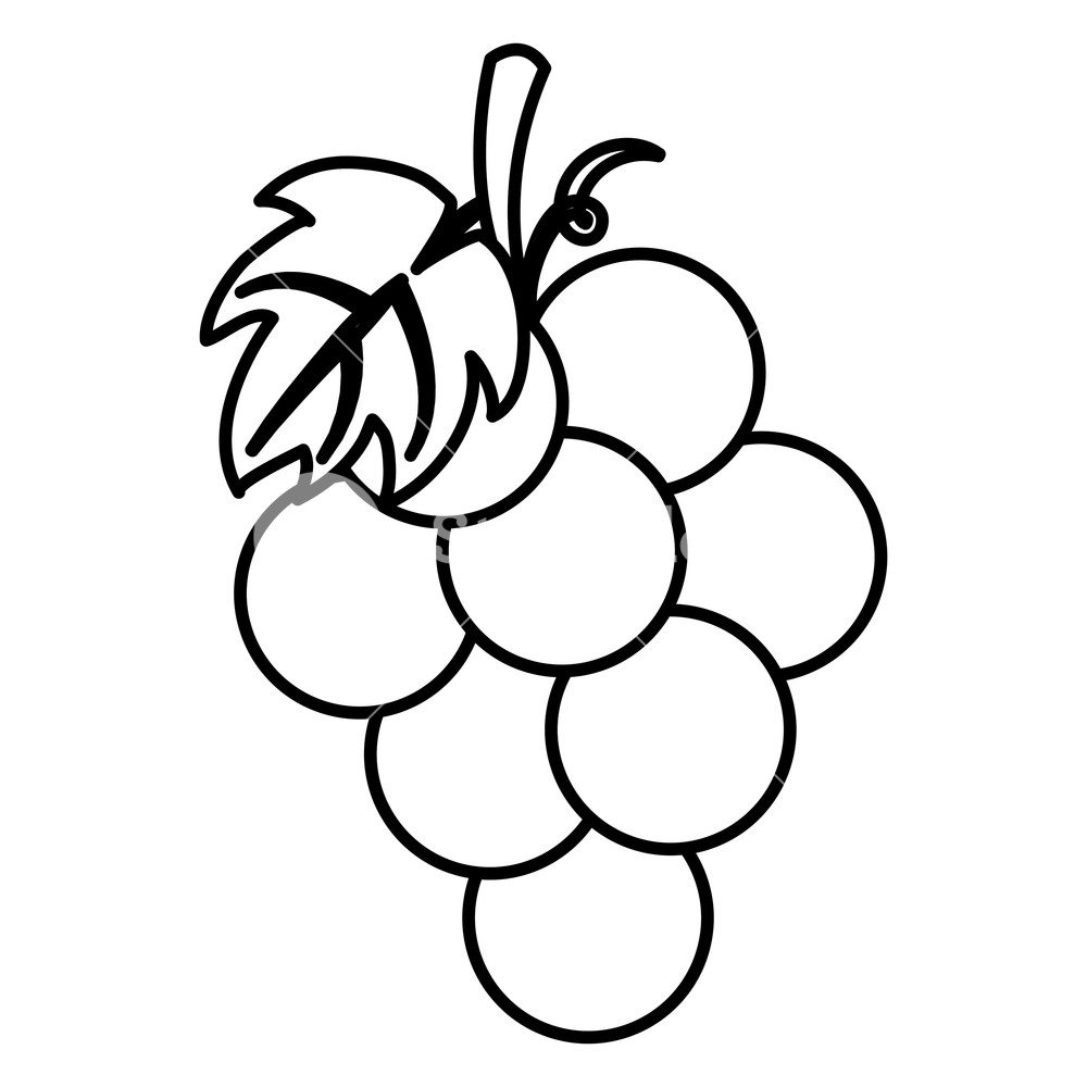 grapes drawing hand drawing of fresh juicy red grapes drawing by iam nee grapes drawing