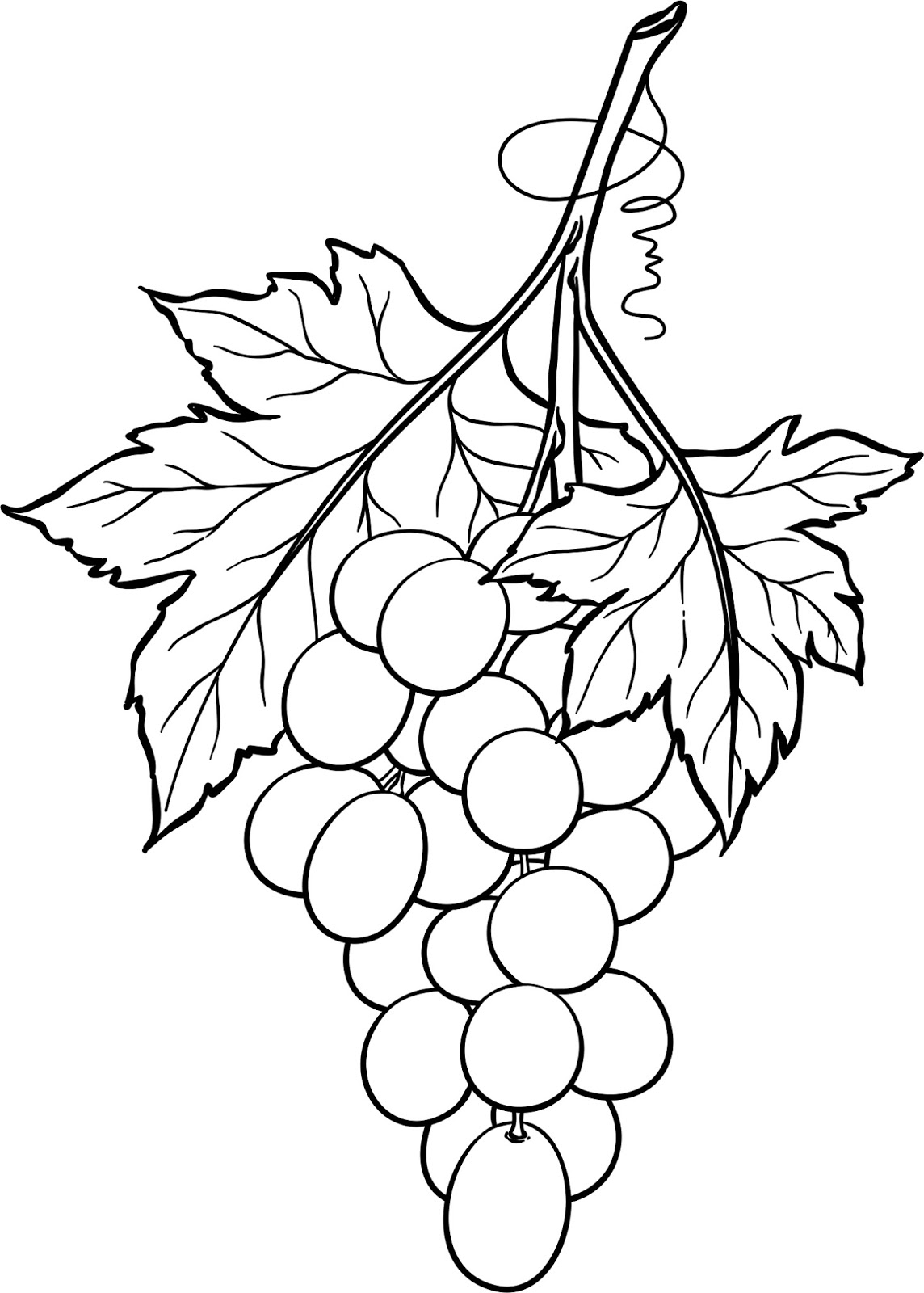 grapes drawing hand drawing of fresh pione grapes on white background grapes drawing