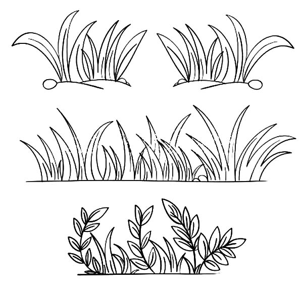 grass coloring images download grass coloring for free designlooter 2020 grass images coloring
