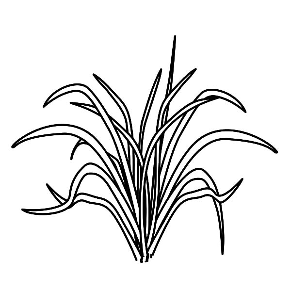 grass coloring images grass coloring pages for kids color luna coloring grass images