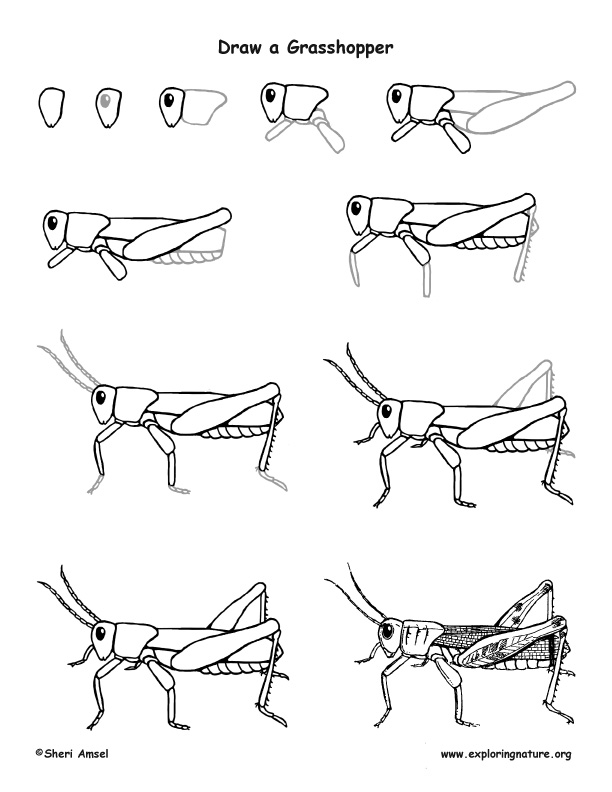 grasshopper drawing hand drawing illustration of grasshopper drawing by grasshopper drawing
