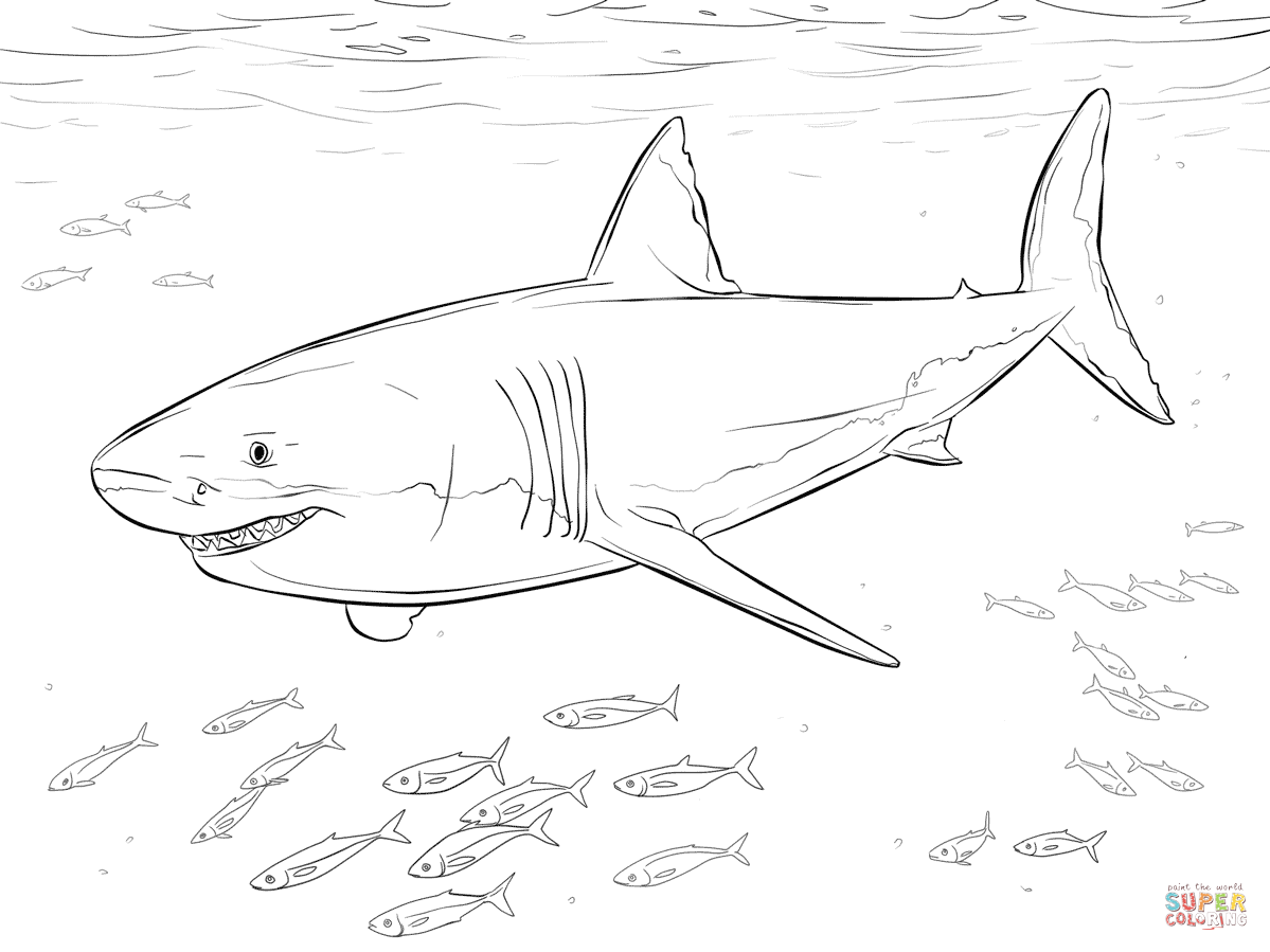 great white shark coloring sheet great white shark coloring pages downloadable and shark sheet coloring white great