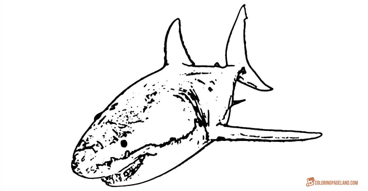 great white shark coloring sheet great white shark coloring pages downloadable and white sheet coloring shark great