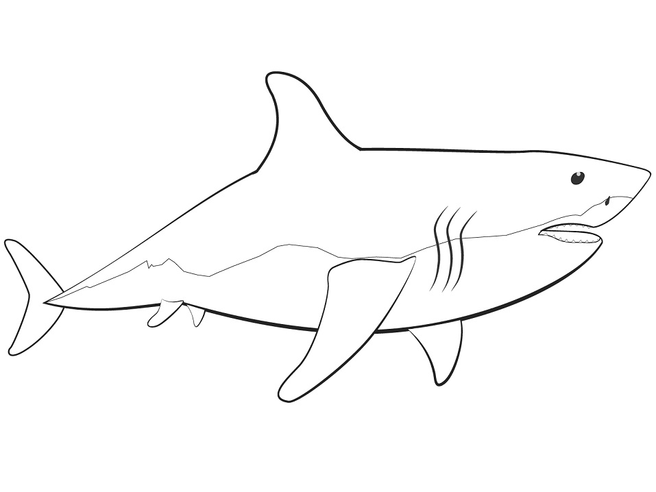 great white shark coloring sheet great white shark coloring pages to download and print for sheet coloring shark great white
