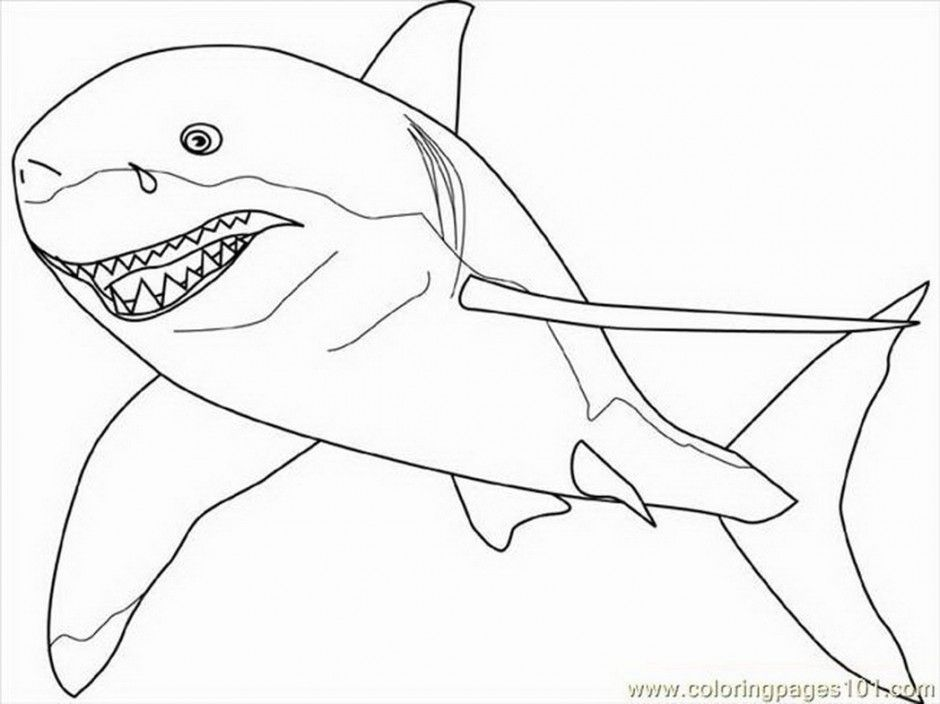 great white shark coloring sheet great white shark outline coloring home great shark sheet white coloring
