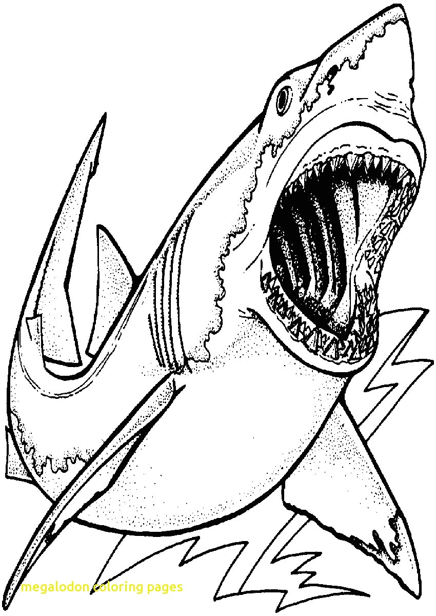 great white shark pictures to print free printable shark coloring pages for kids animal place pictures to print great shark white