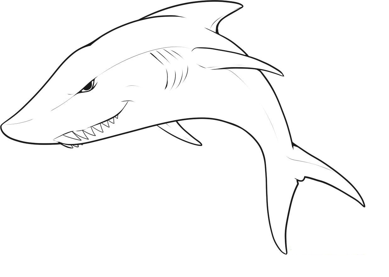 great white shark pictures to print great white shark coloring pages to download and print for to shark pictures print white great
