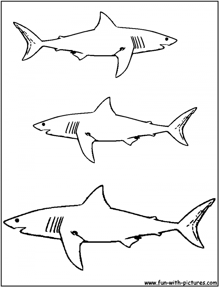 great white shark pictures to print great white shark pictures to print free coloring home great pictures shark white print to