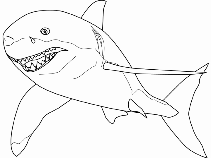 great white shark pictures to print great white shark pictures to print free printable white to print great pictures shark