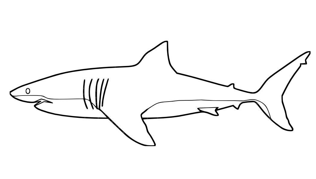 great white shark pictures to print great white shark with pilot fishes coloring page free shark print to great white pictures