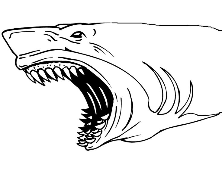 great white shark pictures to print prev next baby great white shark coloring pages shark shark print pictures great to white