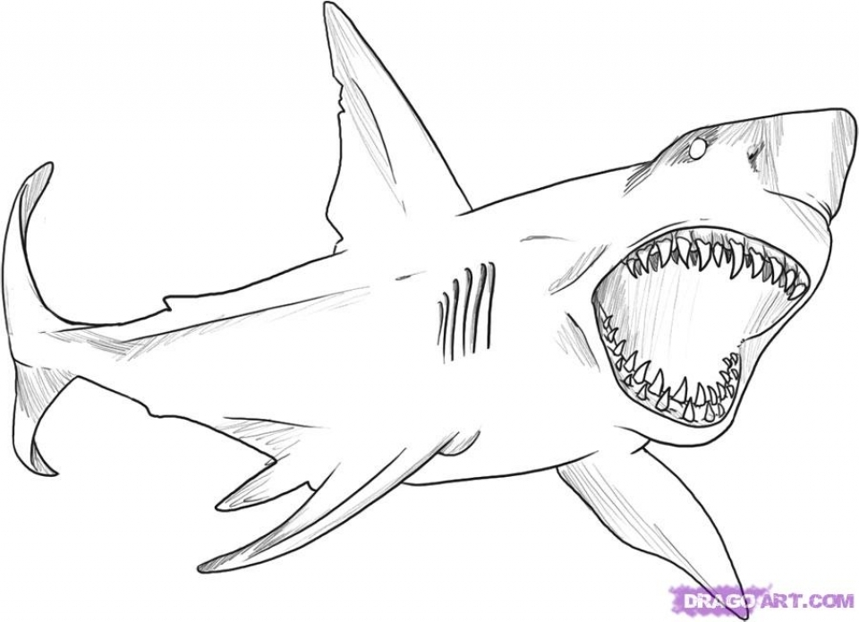 great white shark pictures to print printable great white shark coloring page for both aldults pictures great white to shark print