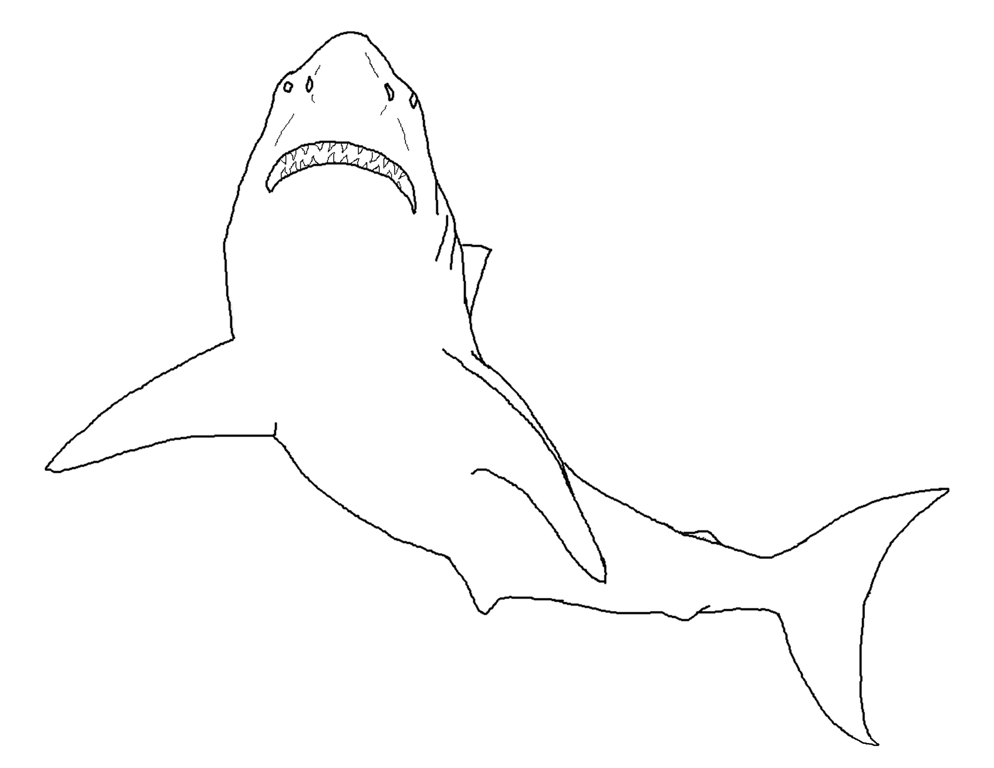 great white shark pictures to print shark coloring pages printable at getdrawings free download great print shark white to pictures