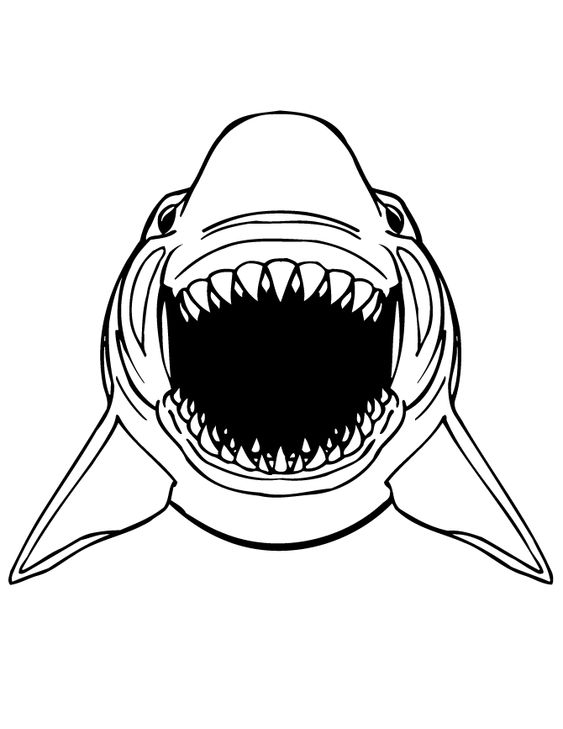 great white shark pictures to print white shark coloring pages at getcoloringscom free great print shark pictures white to