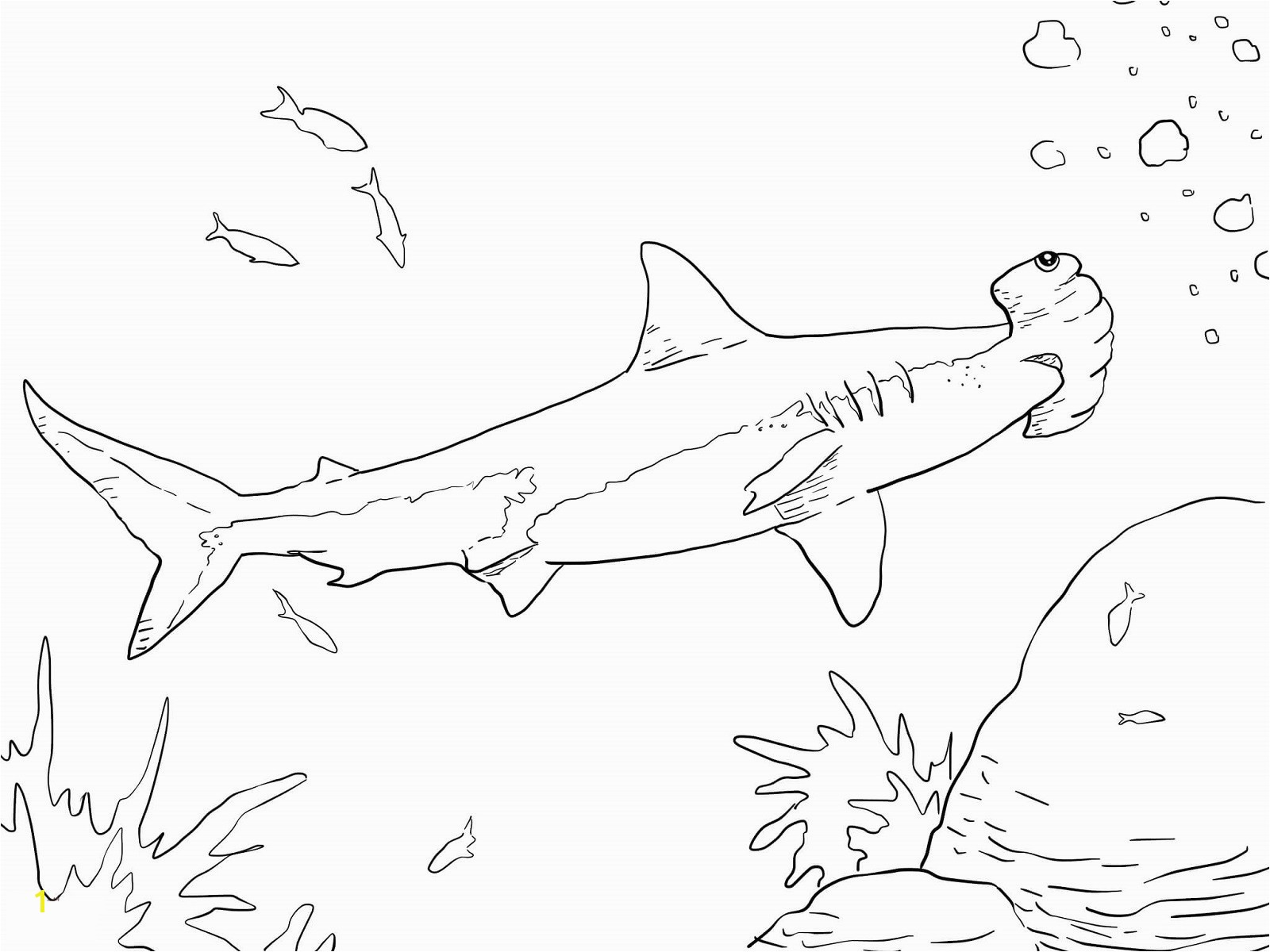hammerhead shark coloring page coloring pages wildlife research conservation coloring page shark hammerhead