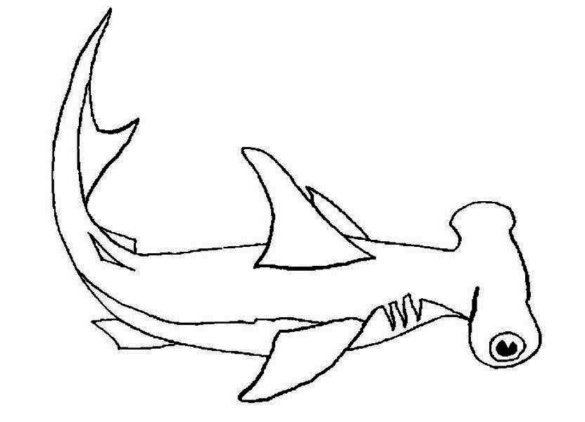 hammerhead shark coloring page get this hammerhead shark coloring pages 99671 shark coloring page hammerhead