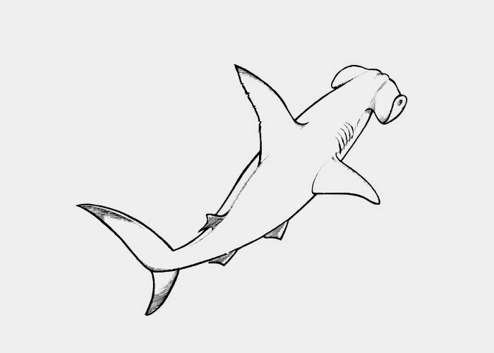 hammerhead shark coloring page hammerhead shark cut out pattern clipart best page shark coloring hammerhead