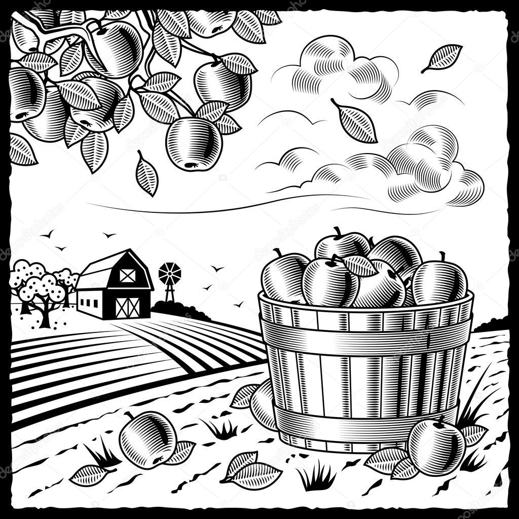 harvest coloring pictures fall harvest coloring page pictures coloring harvest