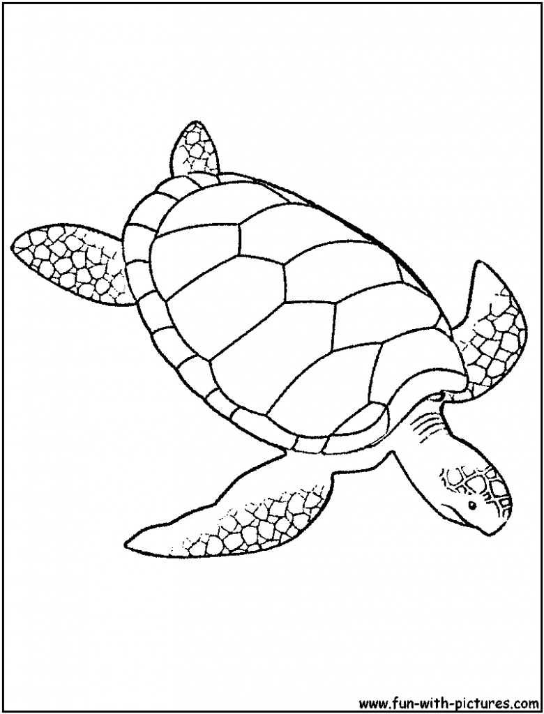 hawaiian turtle coloring pages hawaiian turtle coloring pages at getcoloringscom free coloring hawaiian pages turtle