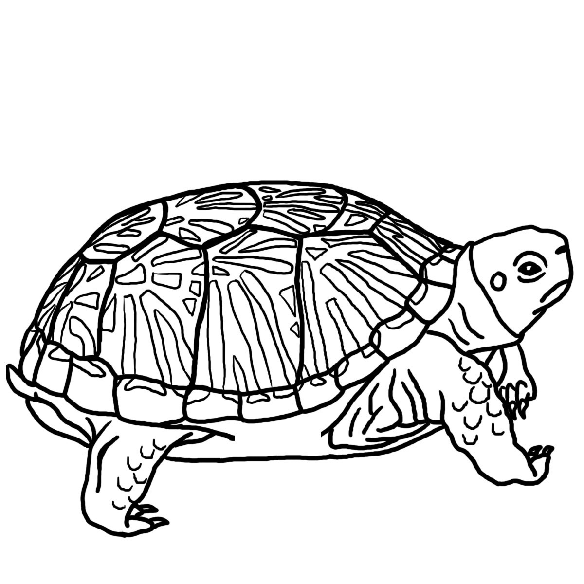 hawaiian turtle coloring pages sea turtle tribal clipart panda free clipart images coloring turtle pages hawaiian