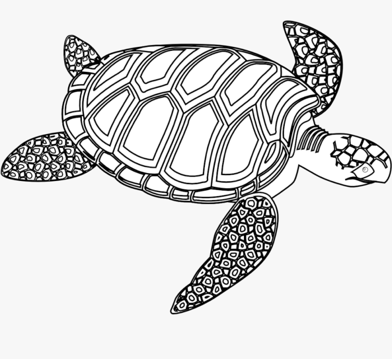 hawaiian turtle coloring pages turtle outline drawing at getdrawings free download hawaiian pages coloring turtle