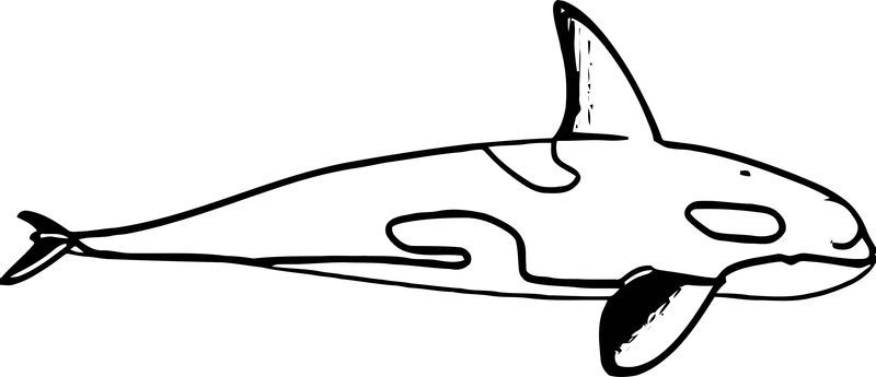 hello kitty dolphin coloring pages winter and hope coloring pages dolphin coloring pages dolphin kitty pages hello coloring