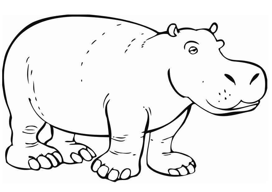 hippopotamus coloring pages printable hippo coloring pages for kids cool2bkids coloring pages hippopotamus