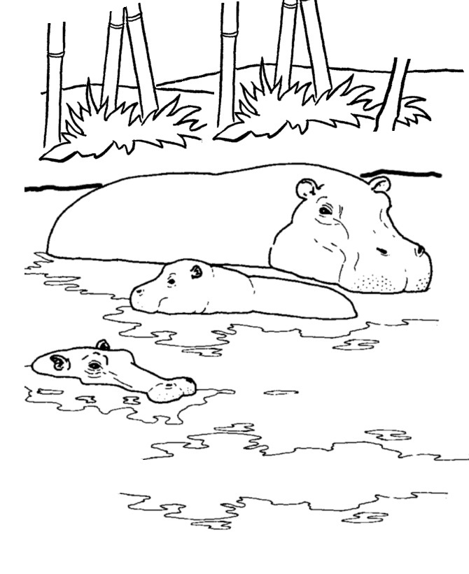 hippopotamus coloring pages printable hippo coloring pages for kids cool2bkids pages hippopotamus coloring 1 1