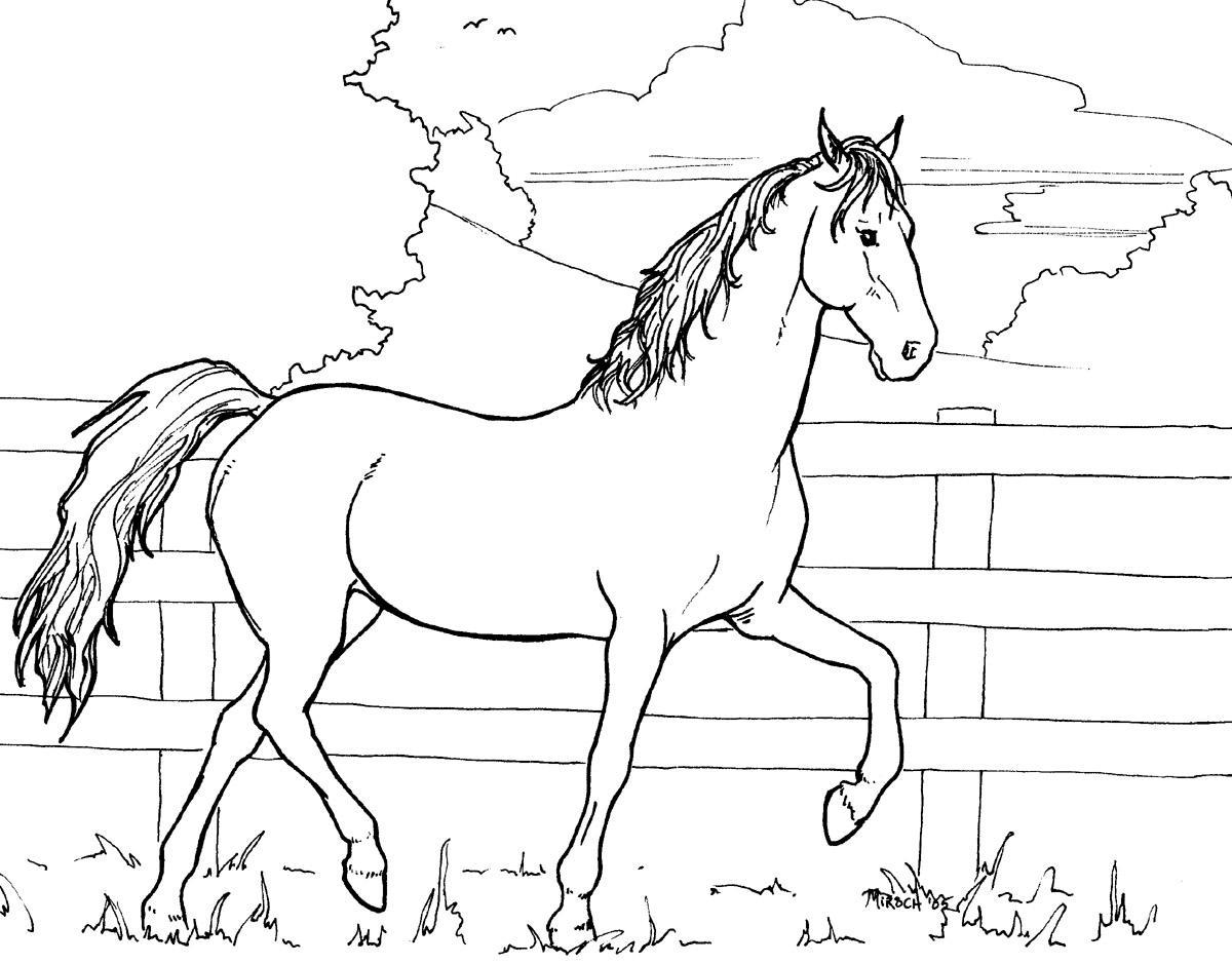 horse colouring picture majestic horse horses adult coloring pages colouring picture horse