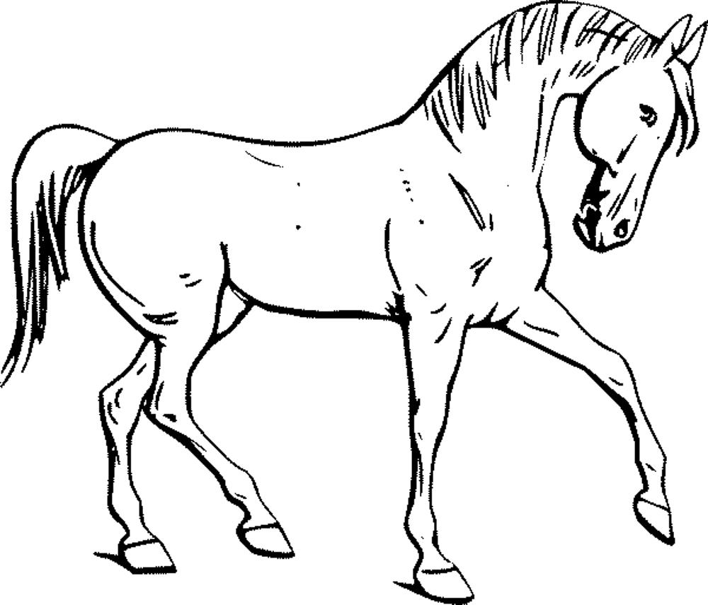 horse pictures to print horse coloring pages preschool and kindergarten to pictures horse print