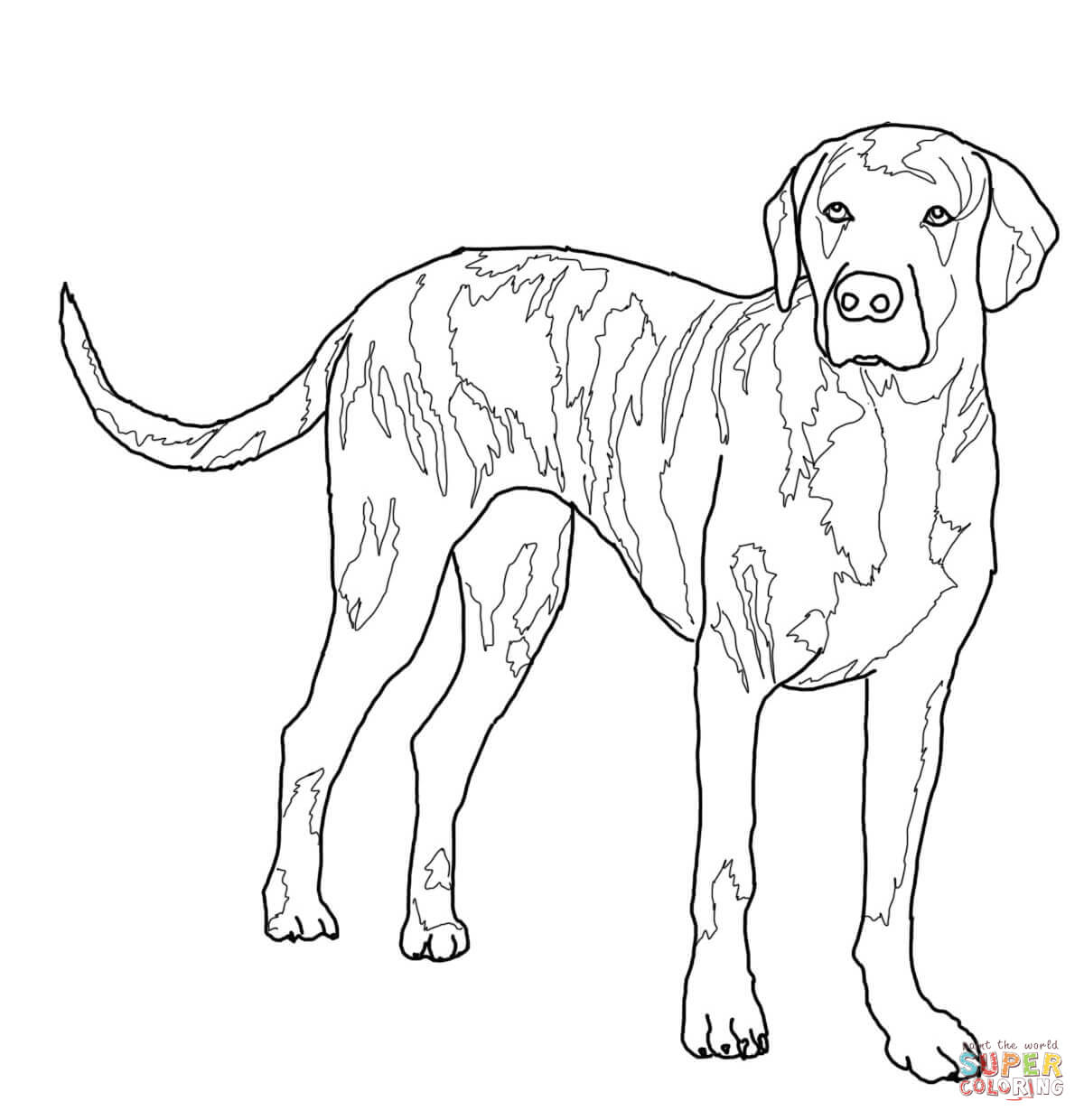 hound dog coloring pages basset hound coloring page free printable coloring pages coloring hound pages dog