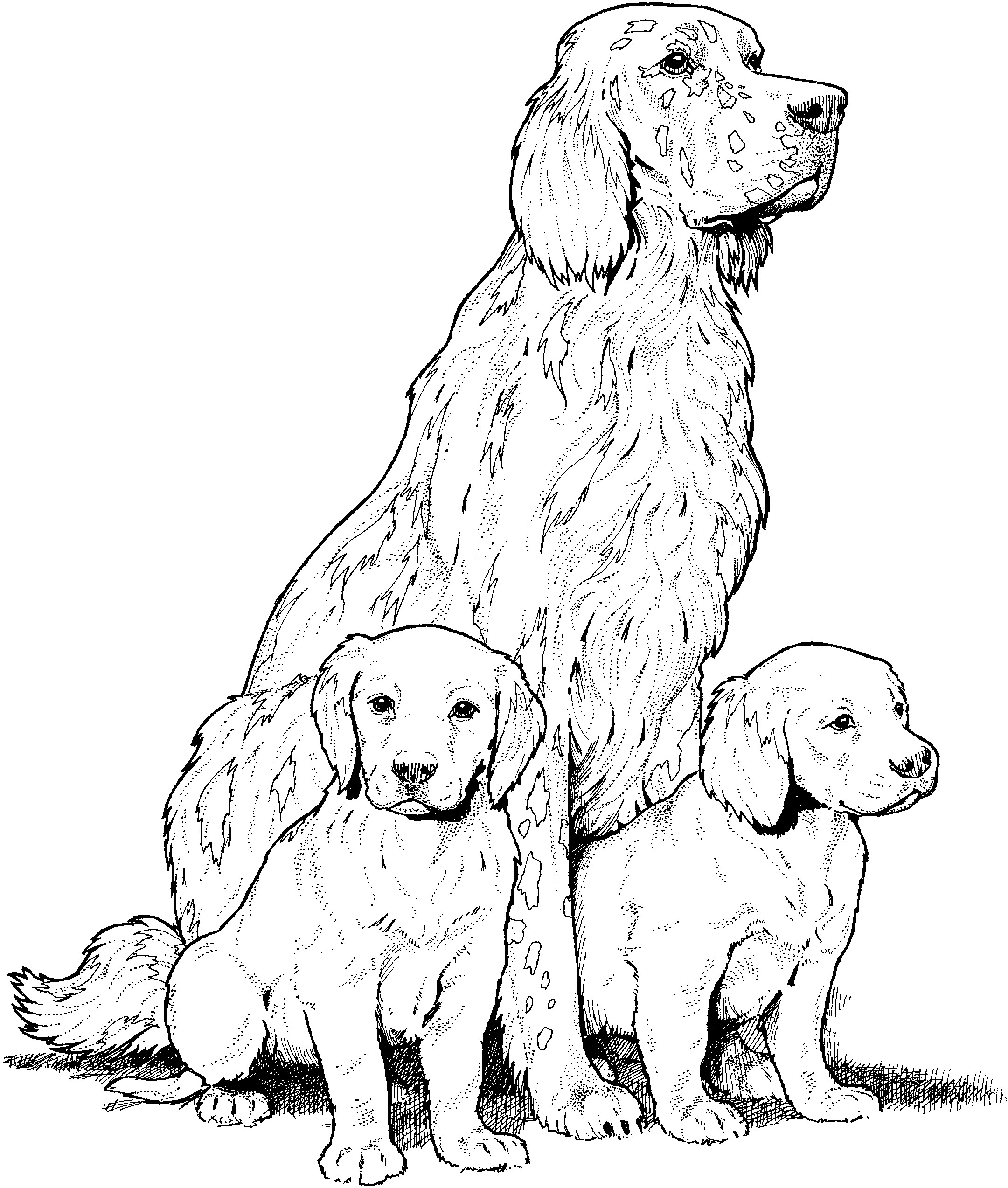 hound dog coloring pages coloring page basset hound hound dog coloring pages