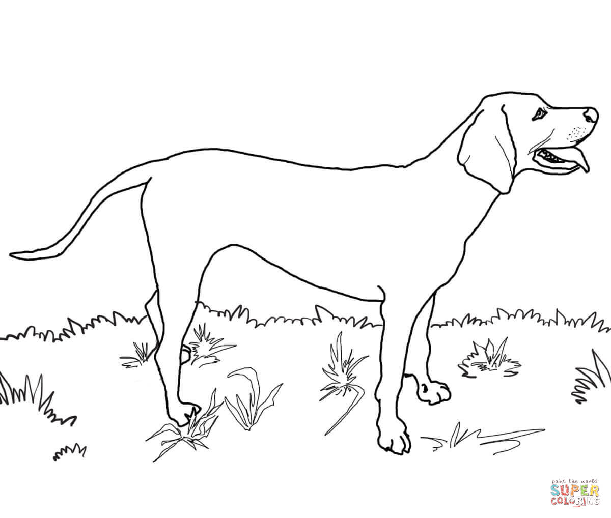 hound dog coloring pages coon dog coloring pages at getdrawings free download dog pages hound coloring