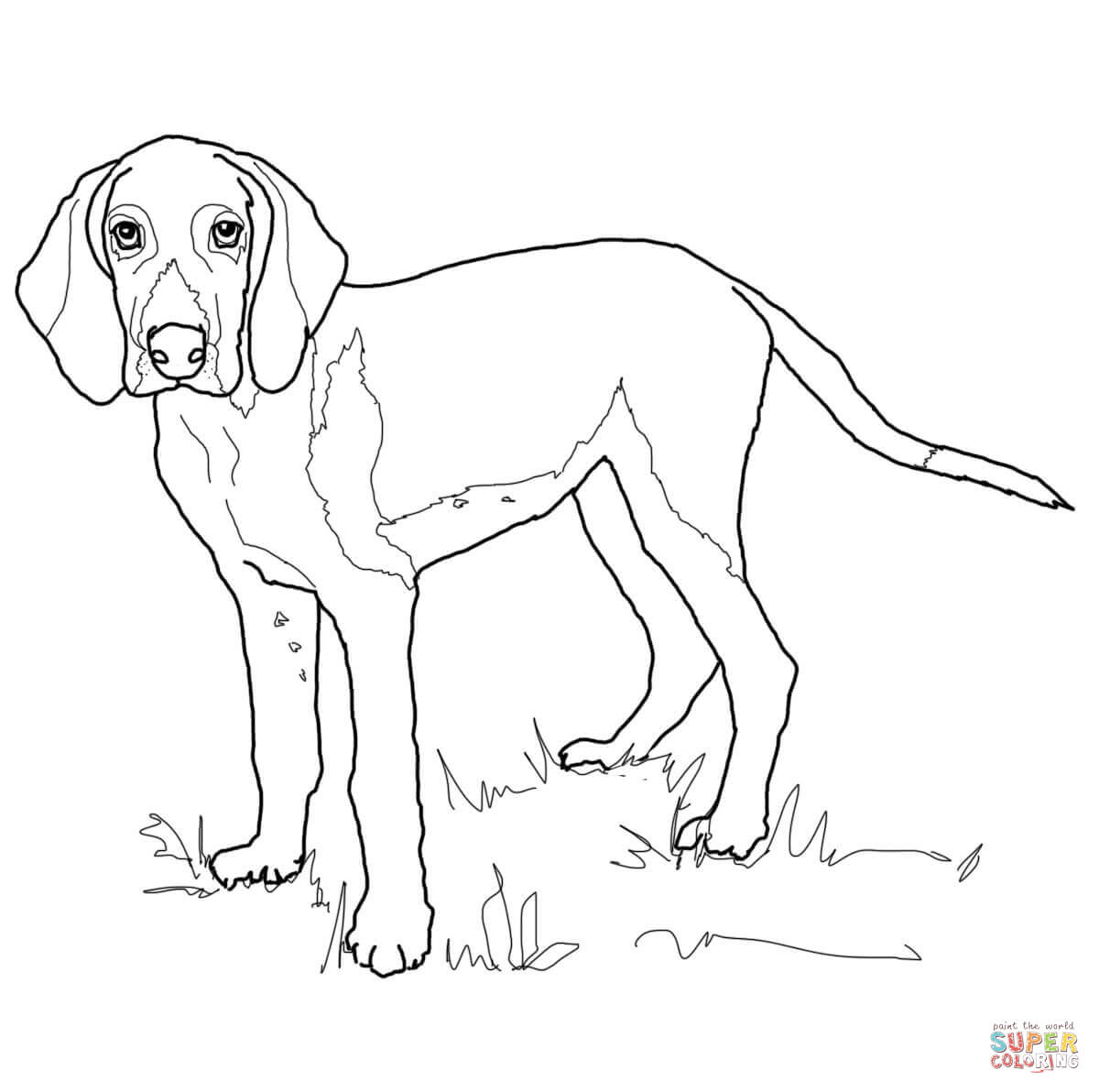 hound dog coloring pages dog coloring pages printable basset hound coloring page hound dog pages coloring