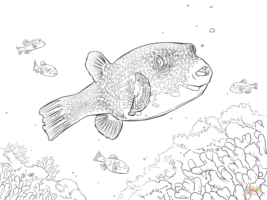 how do you draw a clown fish bone fish drawing free download on clipartmag how do a fish clown you draw
