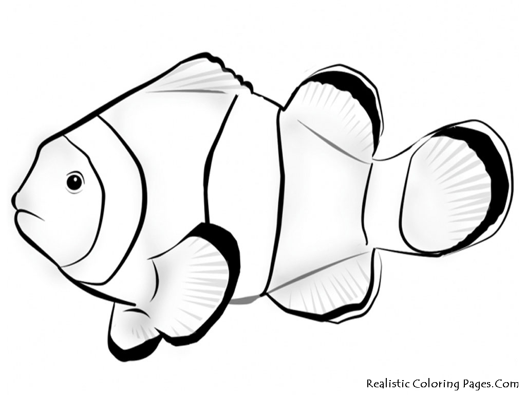 how do you draw a clown fish clown fish drawing at getdrawings free download clown draw you how fish do a