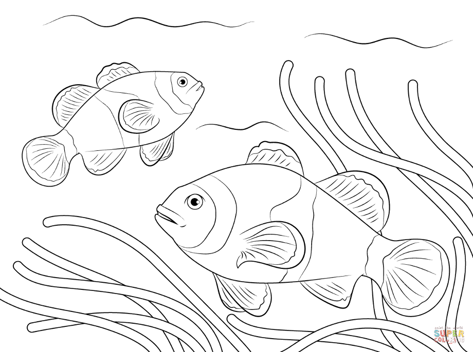 how do you draw a clown fish clown fish drawing at getdrawings free download do clown a fish draw you how
