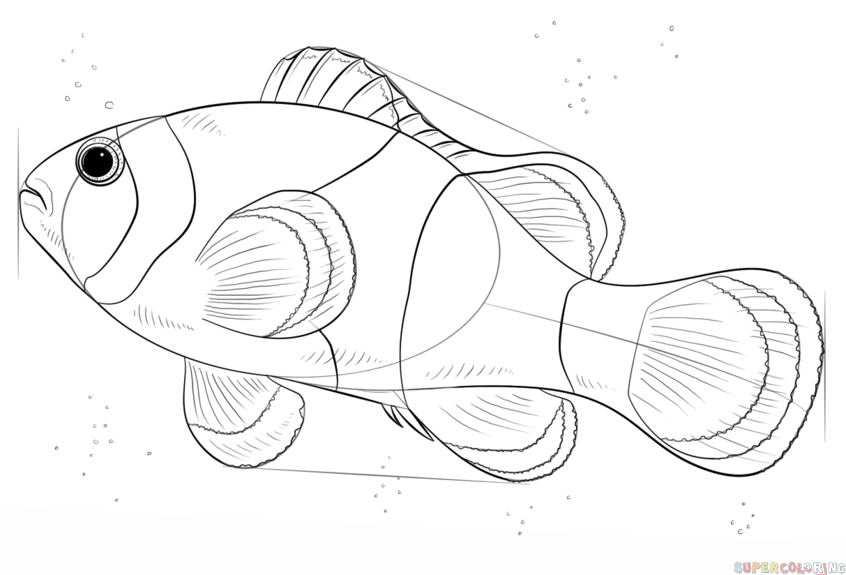 how do you draw a clown fish fish drawing simple at getdrawings free download a clown how you do fish draw