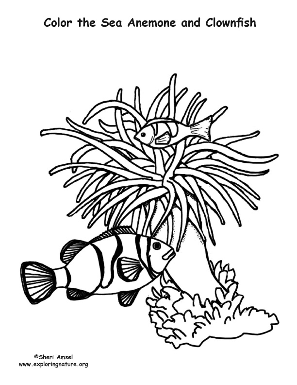 how do you draw a clown fish school of fish coloring pages at getdrawings free download a you draw fish how do clown