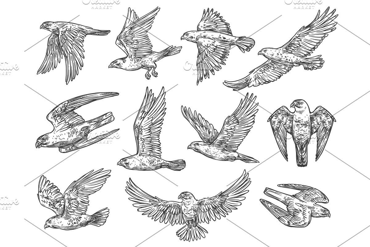 how do you draw a hawk easy hawk drawing at getdrawings free download draw do a you hawk how