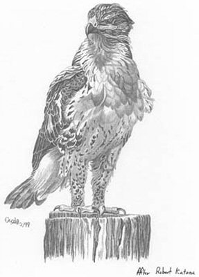 how do you draw a hawk easy hawk drawing at getdrawings free download hawk a you do draw how