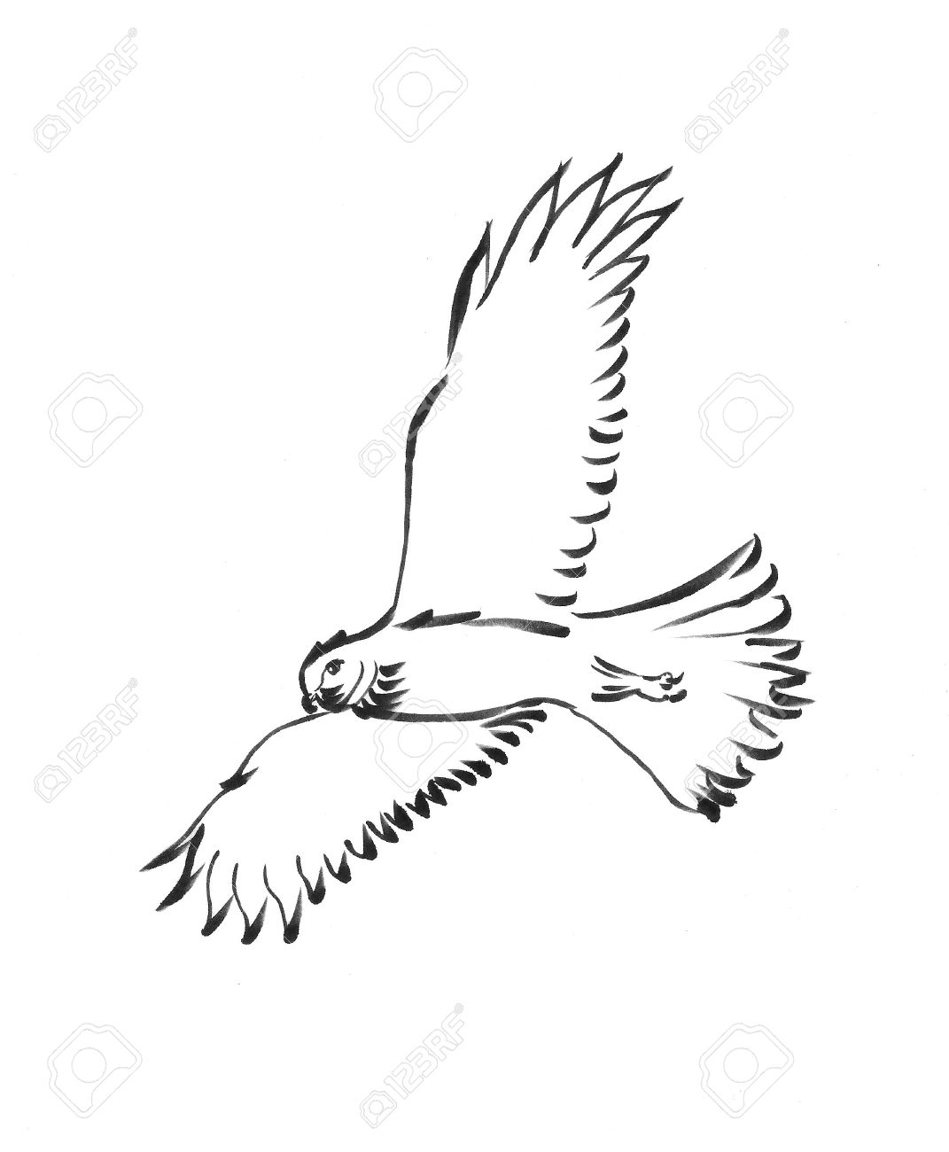 how do you draw a hawk easy hawk drawing free download on clipartmag how a you hawk draw do