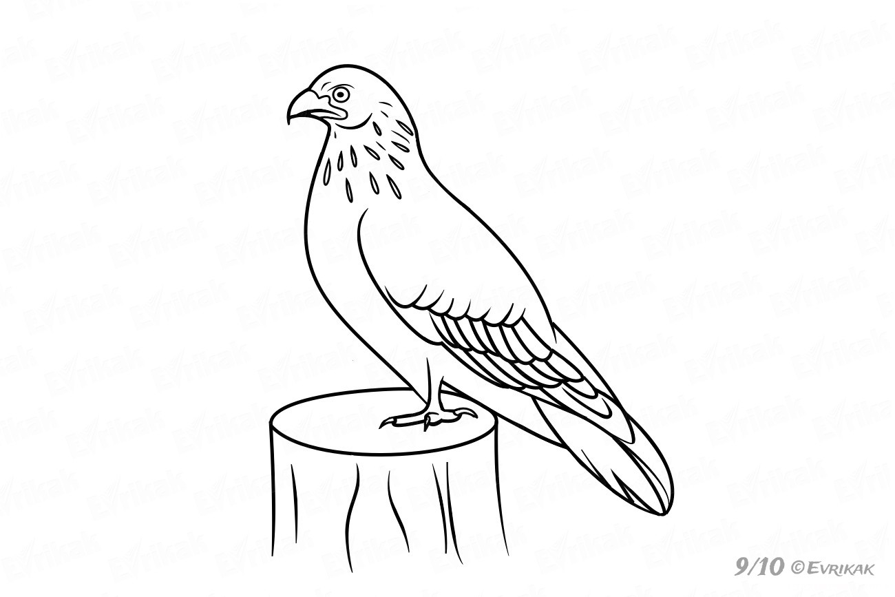 how do you draw a hawk flying hawk drawing free download on clipartmag a do you draw how hawk