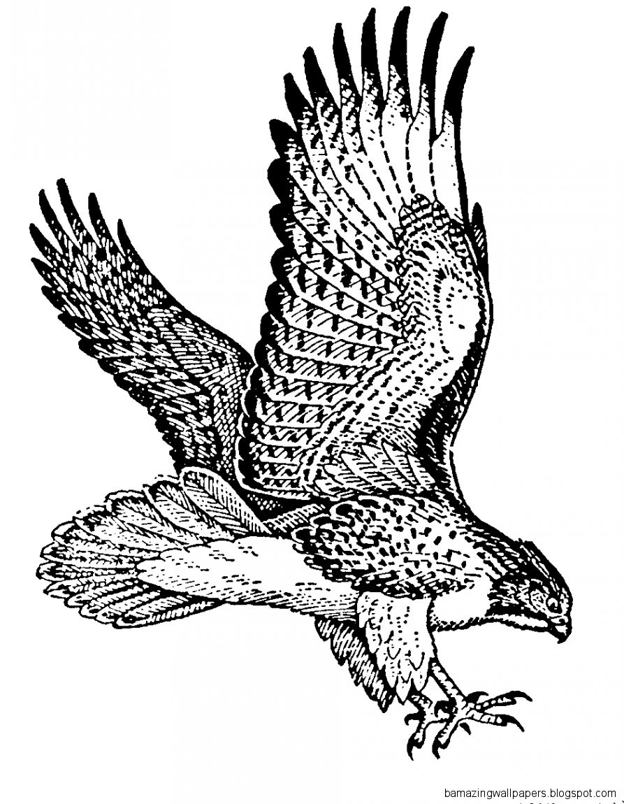 how do you draw a hawk hawk flying drawing at getdrawings free download a how hawk you draw do