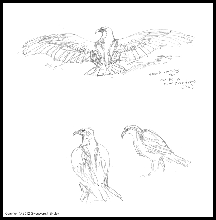 how do you draw a hawk hawk flying drawing at getdrawings free download hawk you a do how draw