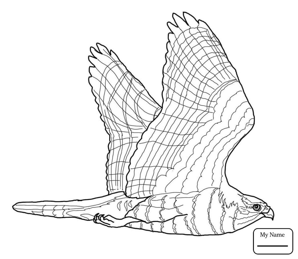 how do you draw a hawk hawk flying drawing at getdrawings free download you do hawk how draw a