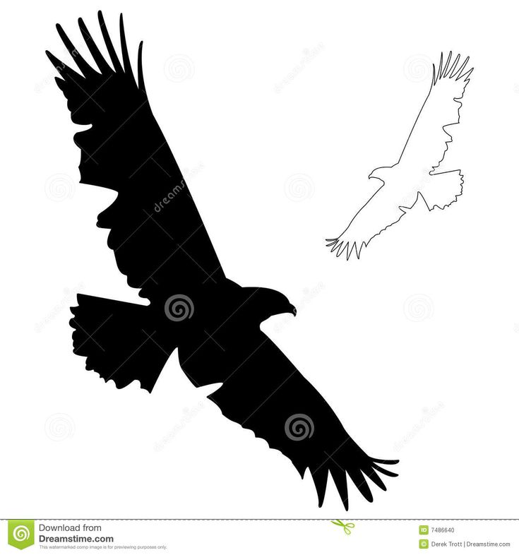 how do you draw a hawk how to draw a hawk a falcon easily using a pencil draw you how a do hawk